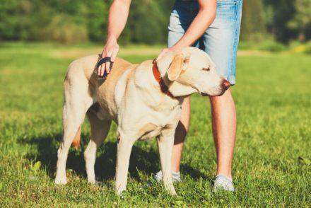 Zwierzęta w domu – jak utrzymać porządek?